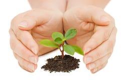 Sprout e mãos novos Imagem de Stock Royalty Free