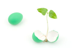 Sprout and egg Stock Images