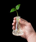 Sprout,flask,hand 01 Royalty Free Stock Image