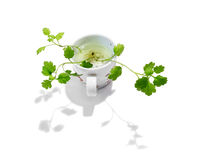 Sprout a flower in a cup of water Royalty Free Stock Images