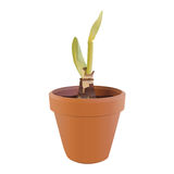 Sprout in a flowerpot. Green sprout in a flowerpot Royalty Free Stock Image