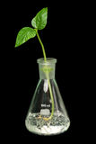 Sprout, garrafa Imagem de Stock Royalty Free