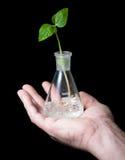 Sprout, garrafa, mão 02 Imagens de Stock