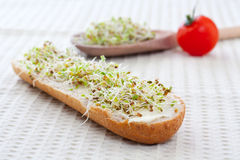 Sprout germ breakfast Royalty Free Stock Photos