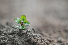 Sprout germinating from the ground taken on manual optics. Selective focus. Nature royalty free stock images