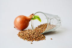 Sprout and a glass with half-spilled lentils Royalty Free Stock Photography