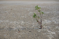 Sprout of a green plant on wet sandy shore Stock Photos