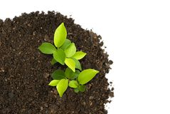 Sprout green plants growing on soil. Manure in the birds eye view Stock Photos