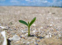 Sprout. A green shoot broke through the sand Royalty Free Stock Photos