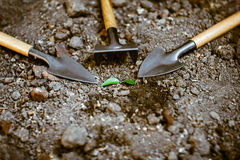 Sprout in the ground alone, around garden accessories. Little green sprout in the ground around a shovel, a rake Royalty Free Stock Images