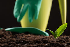 Sprout in ground Stock Photography