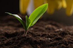 Sprout in ground Royalty Free Stock Images