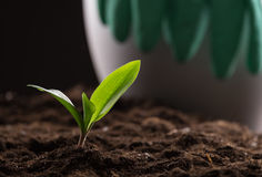 Sprout in ground Stock Images