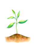 Sprout in the ground. Royalty Free Stock Photography