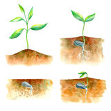 Sprout in the ground. Spring picture.Watercolor hand drawn illustration.White background Stock Photos