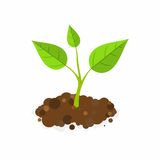 Sprout in the ground. Vector Illustration. Green Sprout in the ground. Vector Illustration Stock Images