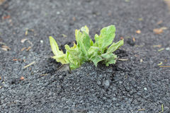 Sprout growing Stock Photos