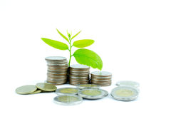Sprout growing on coins in saving money concept. Royalty Free Stock Images