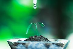 Sprout growing in glass with water drop. Nature and care concept royalty free stock photography