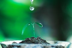 Sprout growing in glass with water drop. Nature and care concept royalty free stock photo