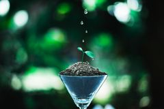 Sprout growing in glass with water drop. Nature and care concept royalty free stock image