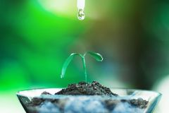 Sprout growing in glass with water drop. Nature and care concept stock image