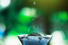 Sprout growing in glass with water drop. Nature and care concept royalty free stock photos