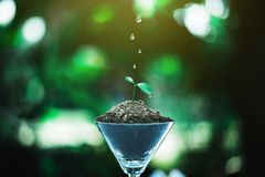 Sprout growing in glass with water drop. Nature and care concept stock photography