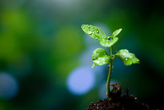 Sprout growing from the ground Stock Image