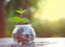 Sprout growing on money pile of glass jar bank Stock Photography