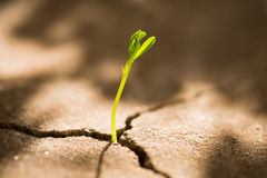 Sprout growing out of concrete Stock Photography