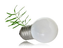 Sprout growing out of the light bulb base Stock Photography