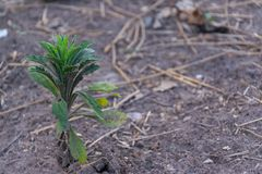 Sprout growing from seed concept of new life. The growing concept royalty free stock photos