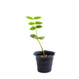 Sprout in hand Stock Photography