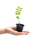 Sprout in hand Stock Photo