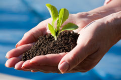 Sprout in hands Stock Photos