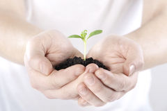 Sprout in hands Stock Image