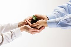 Sprout in hands Royalty Free Stock Photos