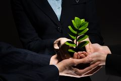 Sprout in hands Royalty Free Stock Photography