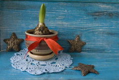 Sprout of hyacinth in a pot. Photo in Christmas style Stock Photography