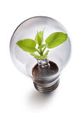 Sprout inside the light bulb Stock Images