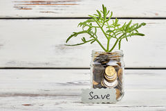 Sprout in jar with coins. stock images