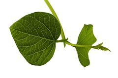 Sprout leaf macro Royalty Free Stock Photos