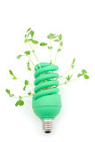 Sprout and light bulb Royalty Free Stock Photos