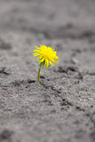 Sprout makes  way through sand. Young sprout makes the way through sand Royalty Free Stock Image