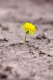 Sprout makes  way through sand Royalty Free Stock Photo