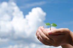 Sprout na mão Foto de Stock Royalty Free