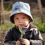 Sprout na mão das crianças Foto de Stock Royalty Free