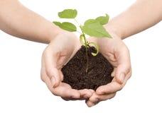 Sprout nas mãos fotografia de stock royalty free