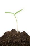 Sprout new life Royalty Free Stock Photography